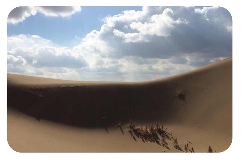 サジーは砂漠を植物が生きていけるように変えてゆく